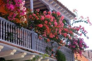 Хранение цветов на балконе