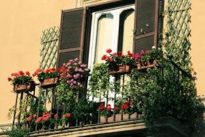 Цветы стали украшением балкона