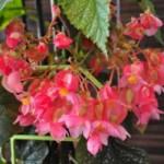 Растениеводство на балконе - лучший способ укрепить иммунитет