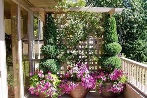 Огород на балконе должен расти не только по горизонтали, но и по вертикали