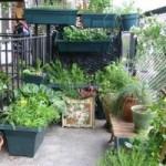 Фото огорода на балконе