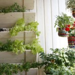образец фото сад на балконе