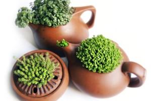 Старый чайник - отличная емкость для выращивания цветов
