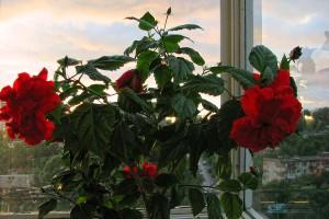 Цветы всегда украсят ваш балкон