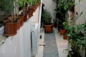 Обогрев зимнего сада при помощи водяного отопления