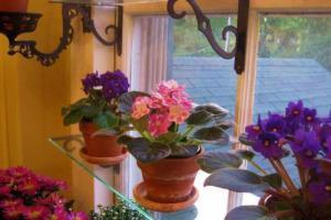 Полки из стекла под горшки с цветами