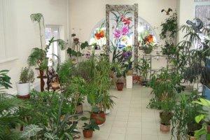 Зимний сад для детского сада