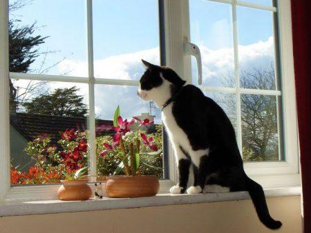 Пластиковые окна опасны для кошек